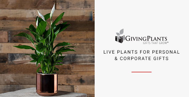 Giving Plants - Gift that Grow